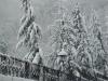 nevicata-a-cosenza-del-16122007011