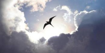 cielo_nuvole_uccello-43296842